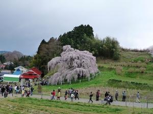 Takizakura2011c