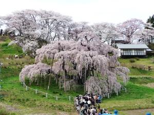 Takizakura2011h