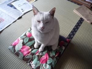 Cat20120105