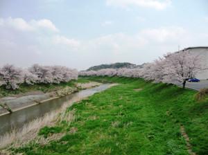 Sakura20120425g