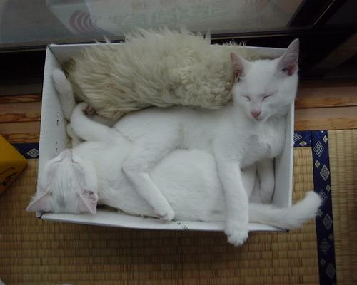 すごい寝相