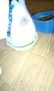 猫にトウモロコシ