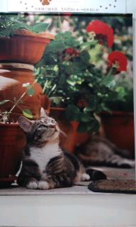 世界ネコ歩き写真展